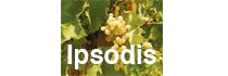 Ipsodis - Spumante & Grappa
